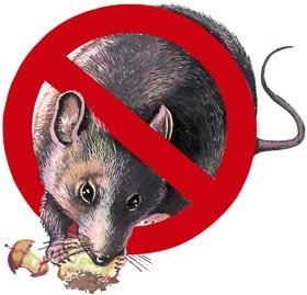 Rodent Control is a must