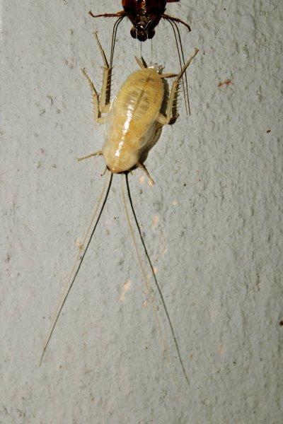 Cockroach Control Miami fl 23