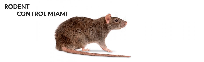 Rodent Control Miami