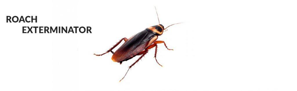 roach exterminator miami